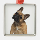 Perrito del dogo francés (7 meses) ornamentos de reyes