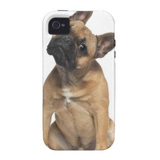 Perrito del dogo francés (7 meses) iPhone 4 fundas