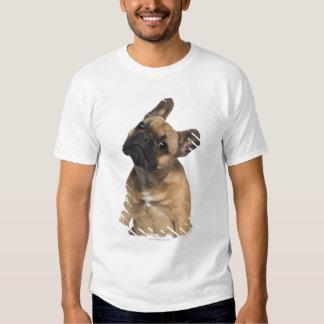 Perrito del dogo francés (7 meses) polera