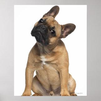 Perrito del dogo francés (7 meses) póster