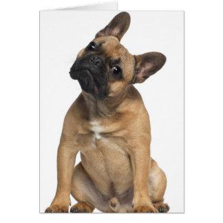 Perrito del dogo francés (7 meses) felicitaciones