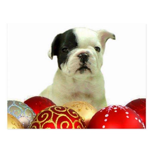 Perrito del dogo francés del navidad tarjetas postales
