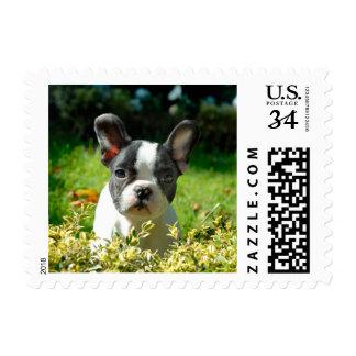 Perrito del dogo francés detrás del follaje timbre postal