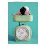 Perrito del dogo francés que comprueba el peso tarjeta de felicitación