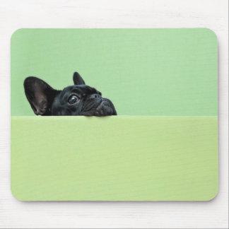 Perrito del dogo francés que mira sobre la pared tapete de raton