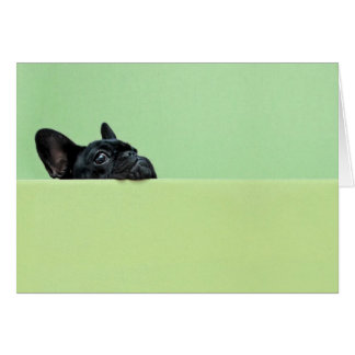 Perrito del dogo francés que mira sobre la pared tarjeta de felicitación