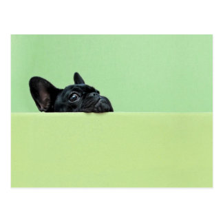 Perrito del dogo francés que mira sobre la pared tarjeta postal