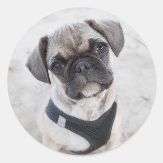 Perrito del dogo francés que parece lindo pegatina redonda