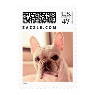 Perrito del dogo francés sello postal