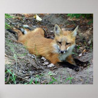 Perrito del Fox rojo - Chillin Posters