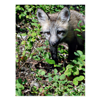 Perrito del Fox rojo Tarjetas Postales