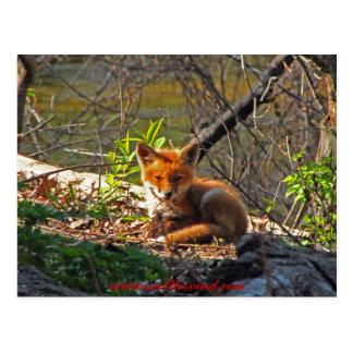 Perrito del Fox rojo Postal