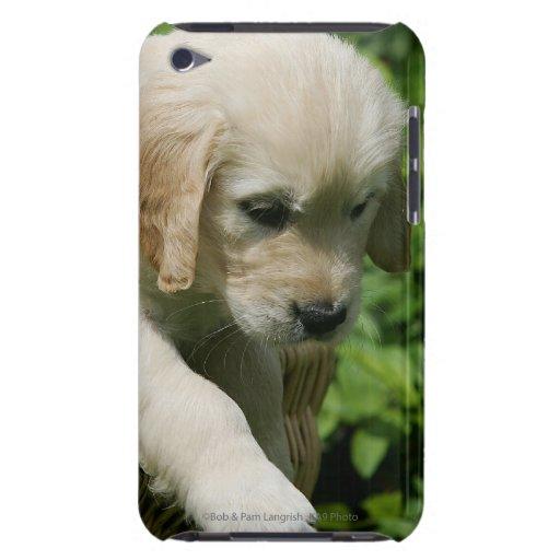 Perrito del golden retriever en cesta Case-Mate iPod touch protectores