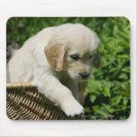 Perrito del golden retriever en cesta mouse pads