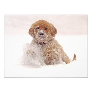 Perrito del golden retriever en nieve fotografía