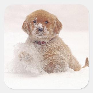 Perrito del golden retriever en nieve pegatina cuadrada