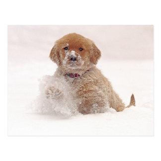 Perrito del golden retriever en nieve tarjeta postal