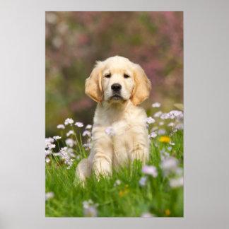 Perrito del golden retriever en un prado un cutie impresiones