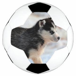 perrito del husky siberiano