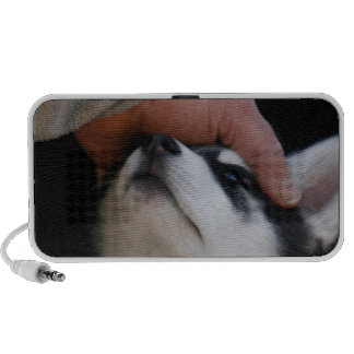 Perrito del husky siberiano del mejor amigo del ho altavoces