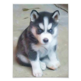 Perrito del husky siberiano fotografias