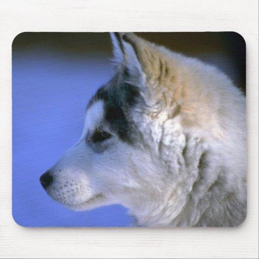 Perrito del husky siberiano alfombrillas de ratón