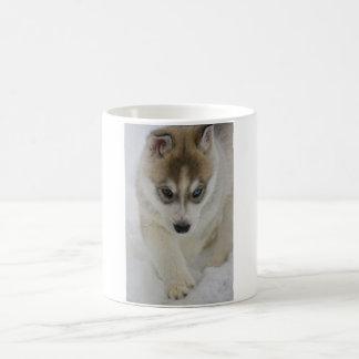 Perrito del husky siberiano taza básica blanca