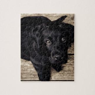 perrito del laboratorio puzzles