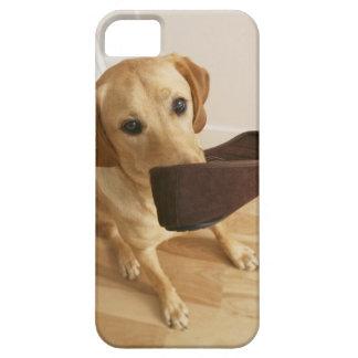 Perrito del labrador retriever con el deslizador iPhone 5 carcasa