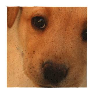 Perrito del labrador retriever posavasos