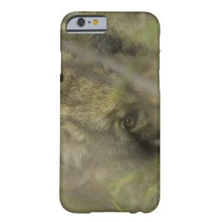 Perrito del lobo gris (lupus de Canis) solo, Funda Barely There iPhone 6
