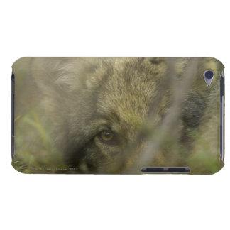 Perrito del lobo gris (lupus de Canis) solo, ocult iPod Touch Cobertura