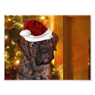 Perrito del mastín del navidad impresión fotográfica