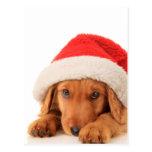 Perrito del navidad que lleva un gorra de Santa Tarjetas Postales