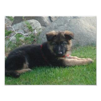 perrito del pastor alemán que pone 2.png fotografía