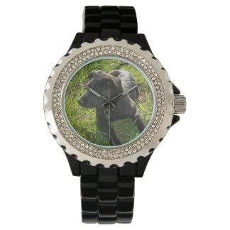 Perrito del pastor alemán relojes de pulsera