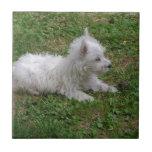 perrito del perro azulejos