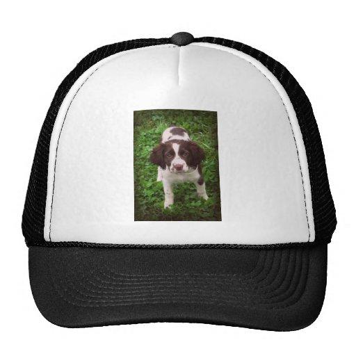 Perrito del perro de aguas de saltador inglés gorras