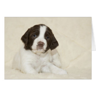 Perrito del perro de aguas de saltador tarjeta de felicitación