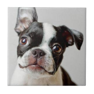 Perrito del perro de Boston Terrier Azulejo Ceramica
