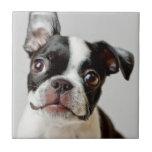 Perrito del perro de Boston Terrier Azulejo Cuadrado Pequeño