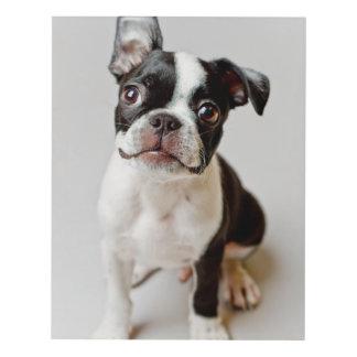 Perrito del perro de Boston Terrier Cuadro