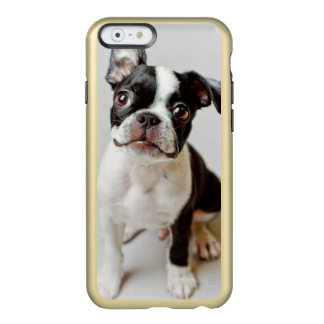 Perrito del perro de Boston Terrier Funda Para iPhone 6 Plus Incipio Feather Shine