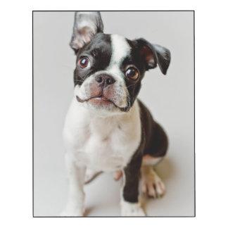Perrito del perro de Boston Terrier Impresión En Madera