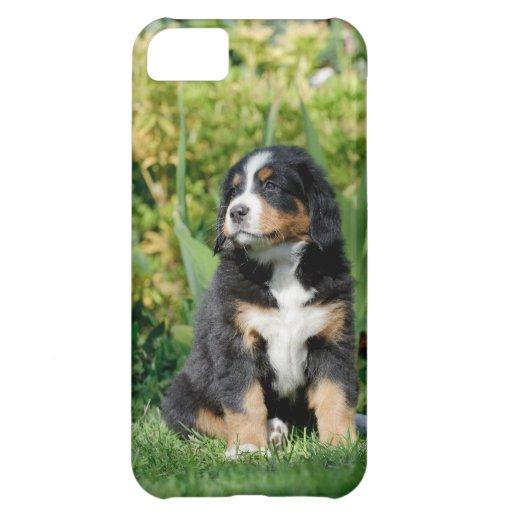 Perrito del perro de montaña de Bernese