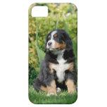 Perrito del perro de montaña de Bernese iPhone 5 Carcasas