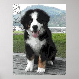Perrito del perro de montaña de Bernese Póster