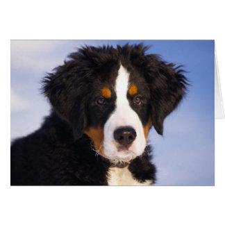 Perrito del perro de montaña de Bernese Tarjeta De Felicitación
