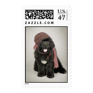 Perrito del perro de Terranova Estampillas