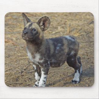 Perrito del perro salvaje tapetes de raton